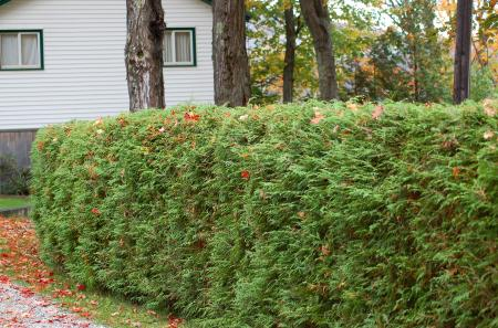 Small hedges