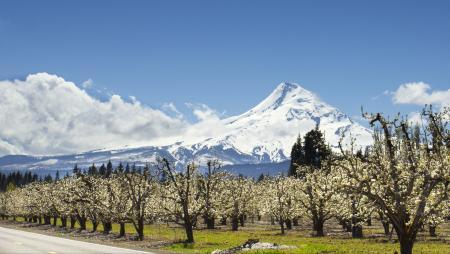 Hood River Orchards, Oregon