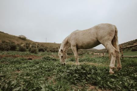 horse eats the grass