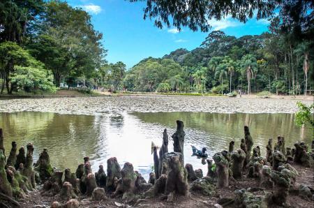 Horto Florestal