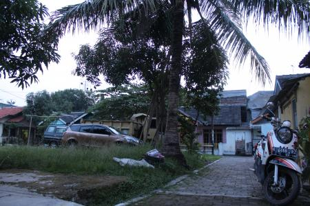 House in Indonesia with Coconut Tree