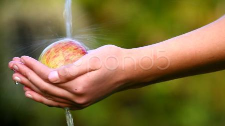 Human hand garden