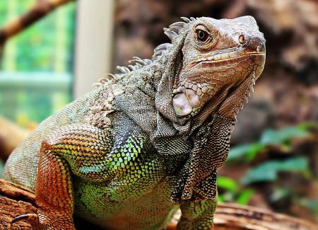 Wild Reptile
