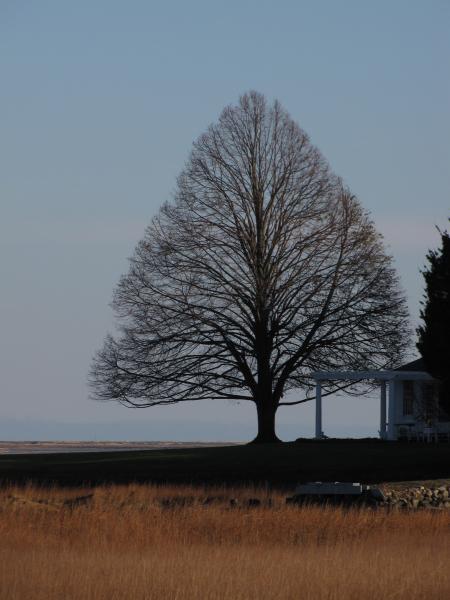 Inside Winter's Tree