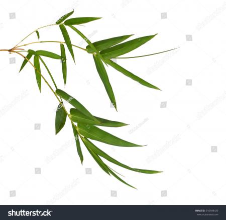 Isolated Bamboo Background