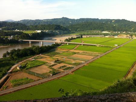 Japanese Field