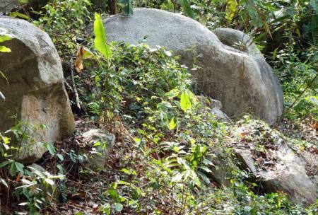 Jungle Boulders