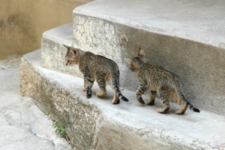 Kittens on the Street