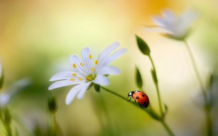 Ladybug in Flower