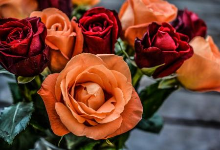 Landscape Photograph of Orange and Red Flowers