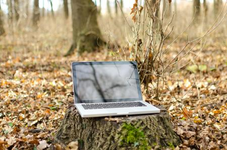 Laptop in Autumn Forest