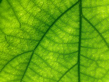 Leaf macro texture