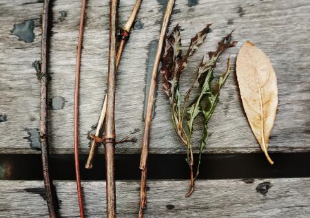 Leaf Ecology Environment Foliage Fresh Growth Concept