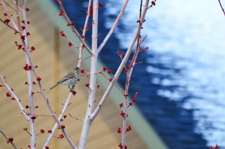 Little bird on a branch of a tree with red berries