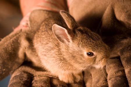 Little bunny in hands