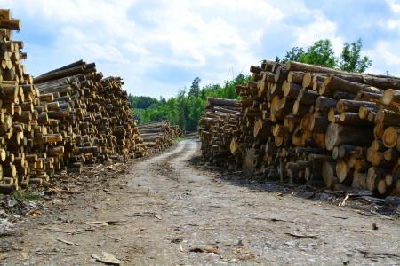 Lots of wood logs