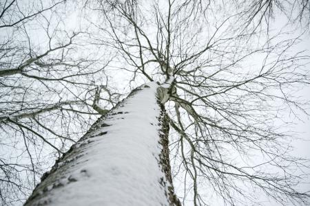 Low Angle Photo of Snow Covered Dried Tree