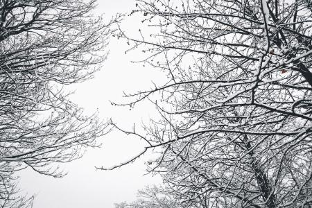 Low Angle Photography of Bare Tree during Winter Season