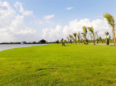 Lush Green Park
