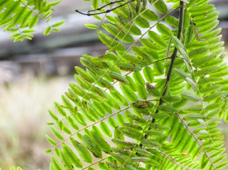 Macro of Green Plant Leaves