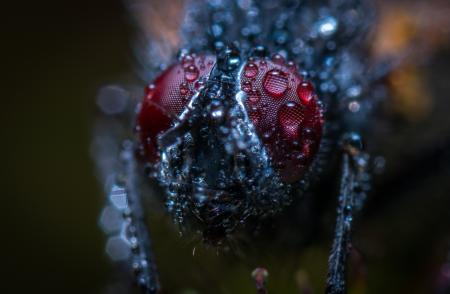 Macro Photograph of an Insect With Water Dew