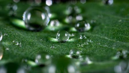 Macro Shot of Water Droplets
