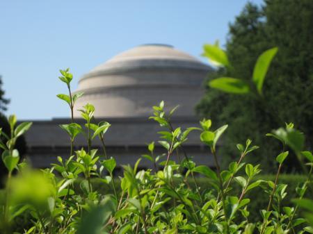 MIT building thru hedge