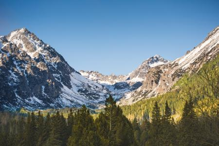 Mountain With Snow and Trees
