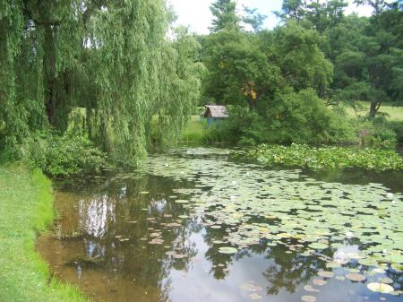 Natural Beauty of Hidden Lake Gardens