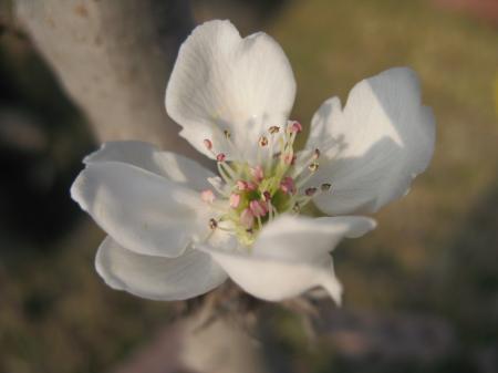 Nature simplistic beauty