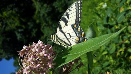 Nectar Loving Butterfly