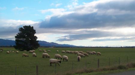 New Zealand Landscape in Winter