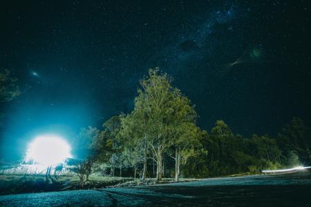 Night Photography of Tree