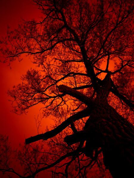 Nightmare Tree