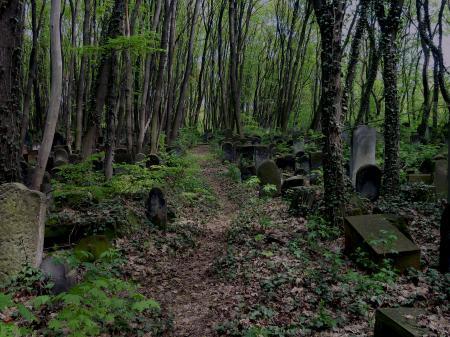 Overgrown Cemetery