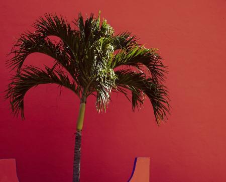 Palm tree Orange background