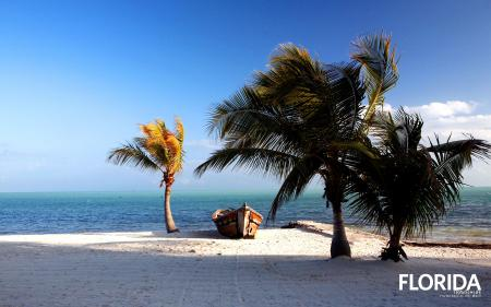 Palms in the Storm, Islamorada, Florida,