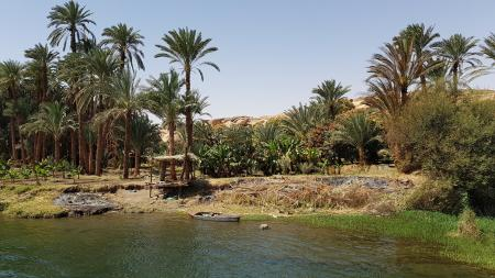 Palms-forest-boat-near-the-nile