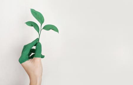 Person's Left Hand Holding Green Leaf Plant