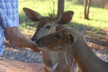 Photo of Person Feeding Two Deers