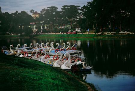 Photo of Swan Boats Near the Shore