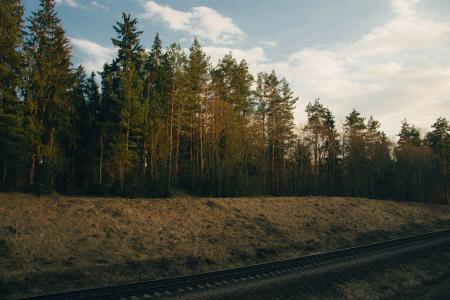 Photo of Trees Near Railway