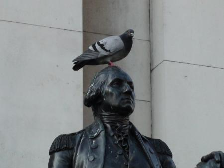 pigeon on statue