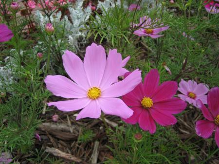 Pink & Purple Flower