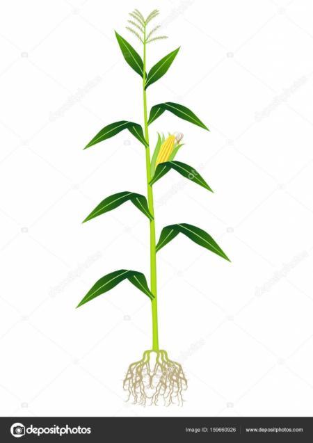 Plant on white