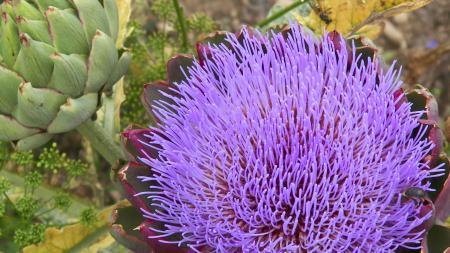 Purple alien flower