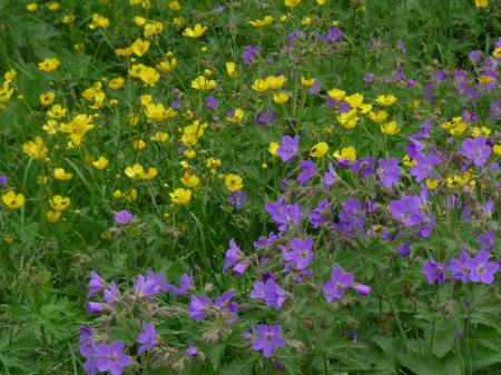 Purple and yellow flowers