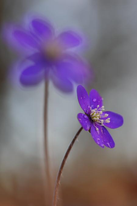 Purple Micro Flowers