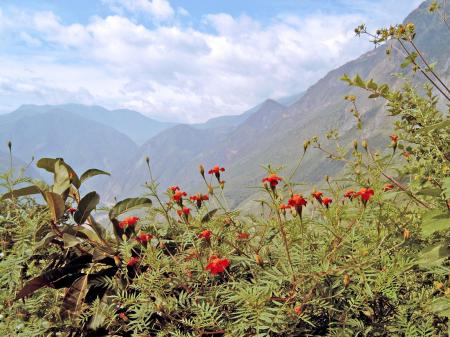 Red flowers with mountain background