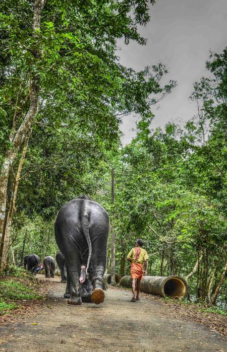 Restricted life of elephant